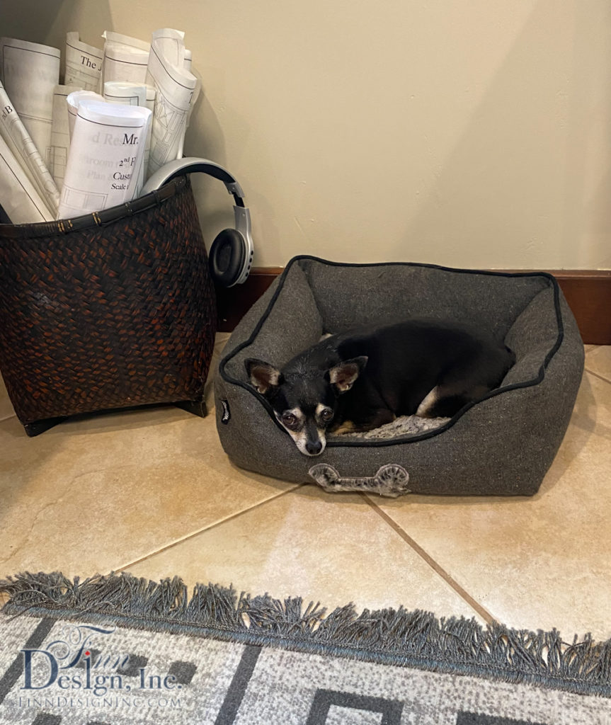 Consider making room for furry friends in your work space.